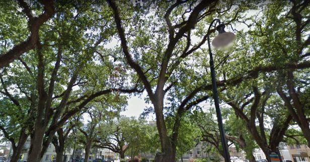 Houma trees